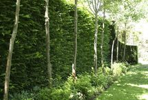 Garden privacy ideas / Fences/screening/ trees for privacy/ container garden privacy ideas/ hedges for privacy/ privacy plants