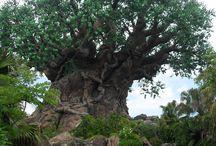 olive trees-zeytin ağaçları