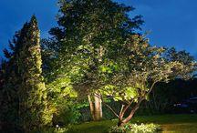 Belysning skog