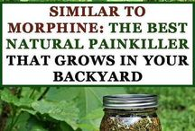 Herbs/Weeds