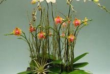 flower love / by Matilda Terolli