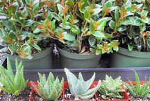 TOP PICKS OF ALOE VERA PLANTS