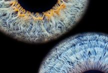 Optometry ❤️