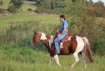 ELÄIMET: Hevosista ja ratsastuksesta