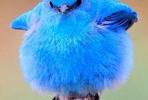 fluffy animal
