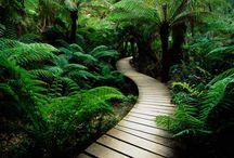 Nature. / Green way