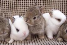 bunnies bunnies bunnies! / by Mariheida Córdova Sánchez