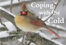 NE - Coping with the Cold / by Cindy West (Our Journey Westward)