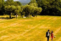 VALDONICA Wedding in Tuscany / VALDONICA is an 18 hectares/ 200 acres WINERY in the hills of Southern TUSCANY - with a breathtaking view to the Mediterranean Sea. Celebrate  with family & friends in VALDONICA - exclusively reserved for you! Picnic in the Vineyards, dining in the Cantina, concert at Valdonica´s medieval Manor House... we are glad if we can assist you in living your dreams in Valdonica!