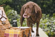 Toxic Food For Pets