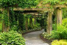 Gardens / by Paula Caver-Madden