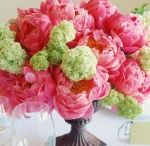pretty flowers / by Melanie Mobley