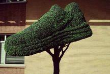 Nike Tree