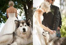 Weddings :: Furry Friends