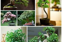 Bonsai colection / Variedad de formas