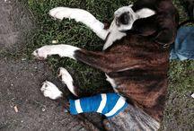 Love boxer / Cani folli