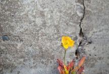 Fleur de faille / Tableau a l'huile