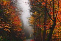 Look! We have autumn ♡