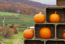 autumn / inspired by autumn