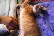 recordando a tanchito mi gatito