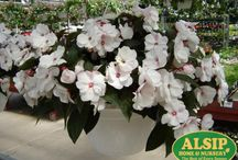 Hanging Baskets / Hanging baskets are one of our favorite parts of spring! They're versatile and well, gorgeous!