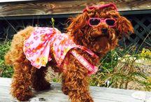 Dogs at the Beach / Bald Head Island, NC