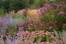 Garden Beauty and Inspiration / Garden inspiration, plant combinations, water wise gardens, xeriscaping, garden design.  Look at specific plant combinations on my other Garden Beauty...Boards   / by Cathy Mandel