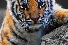 cuadros vellon jaguar