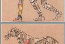 Muscle arms frontleg