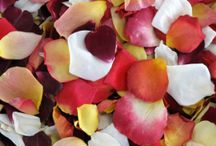 Rose Petals / by Erica Eding