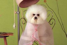 Grooming Dogs  / by Molly Hatcher
