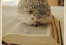 Animals/books Images
