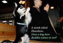 Buddha Nature / A monk asked Zhaozhou: Does a dog have Buddha nature or not?
