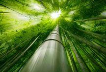Bamboo ideas