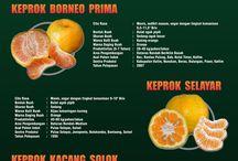 Jeruk (Citrus) / Aneka Jeruk Indonesia