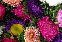 Lauren 16th September - vibrant flowers