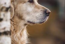 Animal Photography Ideas