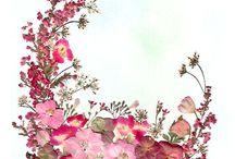 préselt virág