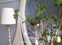 Растения и интерьер / Интересные и уютные решения по планировки интерьера с растениями.
