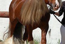 paarden / allemaal mooie foto's van paarden met onder andere Samedi (Sam). (Sam is een paard van kinderboerderij de maten)