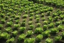Hasznos  növények