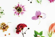 Botanical & Nature