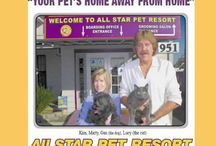 ALL STAR PET RESORT IN TORRANCE CALIFORNIA / All Star pet resort has been serving the Torrance, CA  and South Bay dog and cat community for over 35 years. We offer a full range of Dog and Cat boarding accommodations and activities to make your pets stay both exciting and enjoyable. You will feel content knowing that your pet is receiving the best possible, experienced loving care. All Star pet resort is licensed, insured, regularly inspected by the DACC.