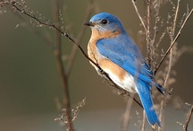 Bluebird board / Theme colors