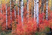 Autumn / by Lori Moats