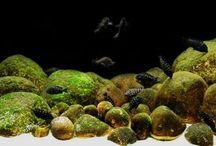 Биотопные аквариумы