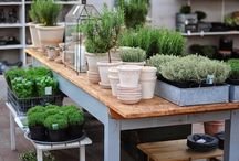Planting Sheds & Benches / Greenhouses of various types, planting sheds, and planting tables and areas - for anyone with a green thumb or who aspires to such - to plant and grow flowers, plants, and vegetables in the backyard for recreation, relaxation, a side income, enjoyment, or persoanl use