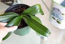 fertilizzanti naturali orchidee