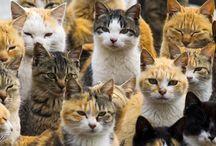 Armia kotów