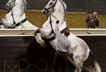 Equestrian photos and quotes